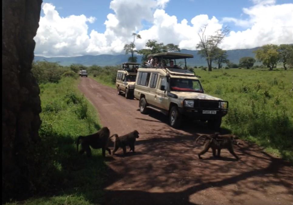 Safari Day Manyara Ngorongoro