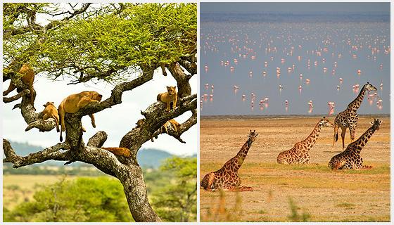 Visit Tanzania