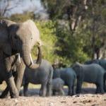 Wild Safari Experiences in Ruaha, Tanzania
