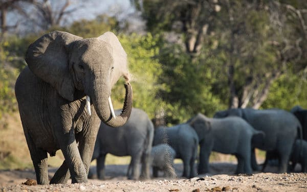 Wild Safari Experiences in Ruaha, Tanzania